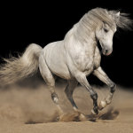 White-horse-black-background